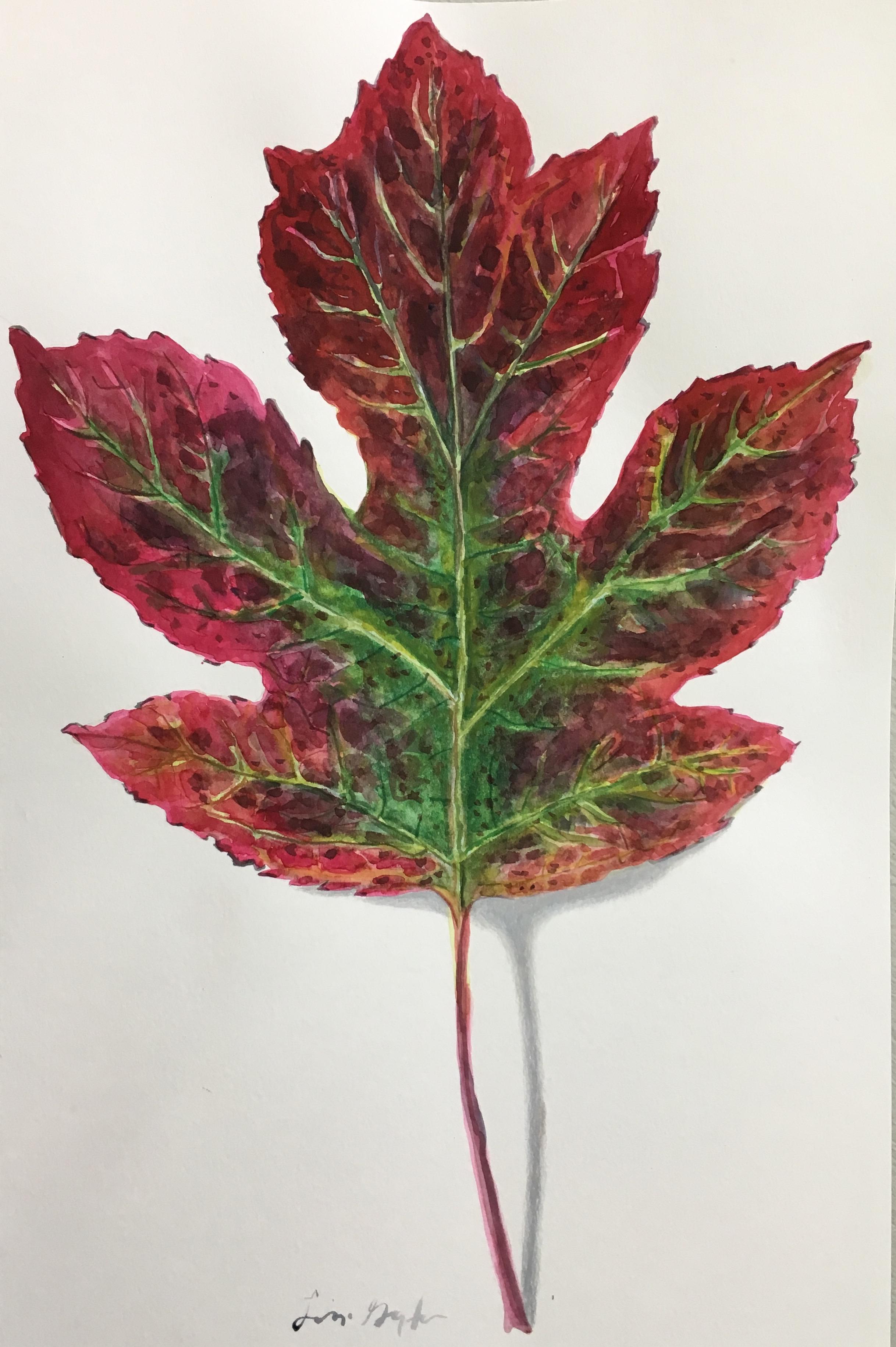 Hydrangea Leaf, watercolor