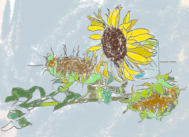 Sunflower Study